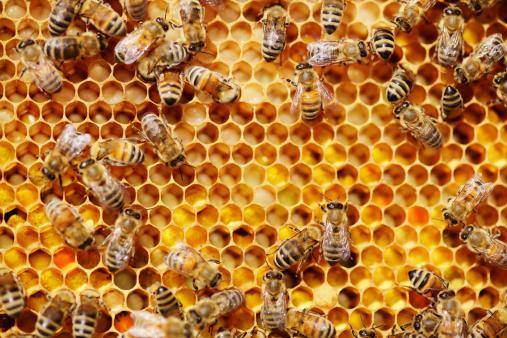 Poisonous「Bees」:スマホ壁紙(17)