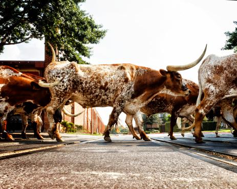 Females「Texas Longhorns」:スマホ壁紙(12)