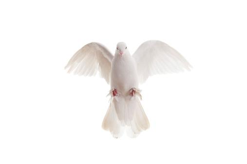 Mid-Air「White pigeon」:スマホ壁紙(1)