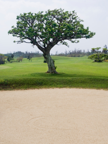 Sand Trap「Japan, Okinawa Prefecture, Ishigaki Island, large tree on sand bunker」:スマホ壁紙(14)