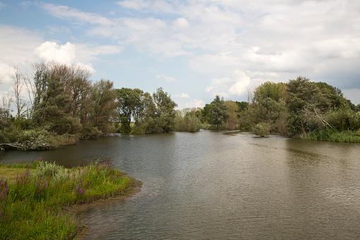 North Brabant「Restored tidal creek in Dutch Biesbosch National Park」:スマホ壁紙(1)