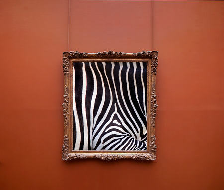 British Columbia「Photographic of zebra stripes in frame on wall.」:スマホ壁紙(14)