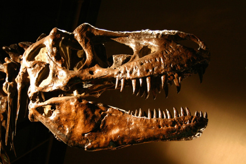 Ancient「T-Rex Dinosaur Skull, Sharp Teeth Abound!」:スマホ壁紙(14)