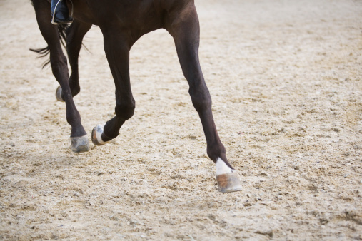 Dressage「detail of horse doing dressage exercise」:スマホ壁紙(8)