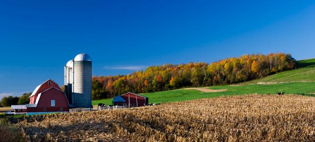 Corn - Crop「Red Barn on Autumn Afternoon」:スマホ壁紙(15)