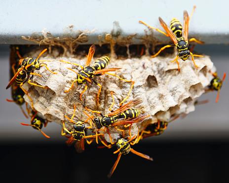 Limb - Body Part「Wasp Nest Macro」:スマホ壁紙(11)