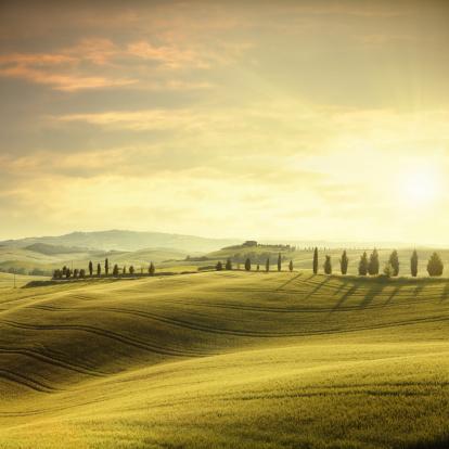 Italian Cypress「Sunset in Tuscany」:スマホ壁紙(8)