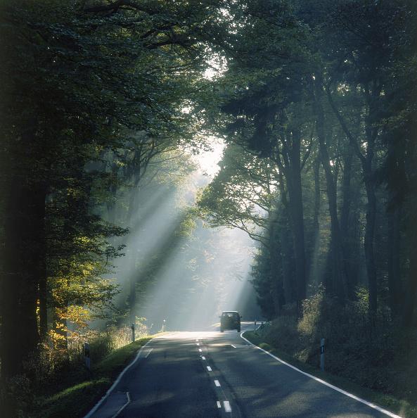Road「Forest road at morning - region of Eifel - county of Rhineland palatinate - Germany」:写真・画像(4)[壁紙.com]