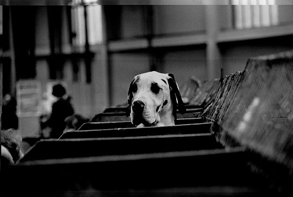 Human Interest「Curious Hound」:写真・画像(18)[壁紙.com]