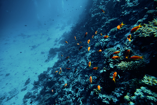 Ecosystem「tropical fishes swimming near colorful corals」:スマホ壁紙(0)