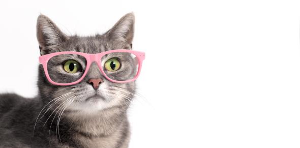 Cat「Cat in glasses」:スマホ壁紙(19)