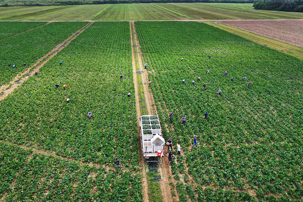 Farm「Essential Farm Workers Continue Work As Florida Agriculture Industry Struggles During Coronavirus Pandemic」:写真・画像(7)[壁紙.com]