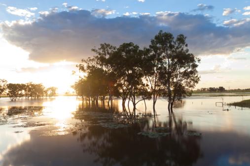 Extreme Weather「Trees & Flooded Creek, Rockhampton, Queensland」:スマホ壁紙(5)