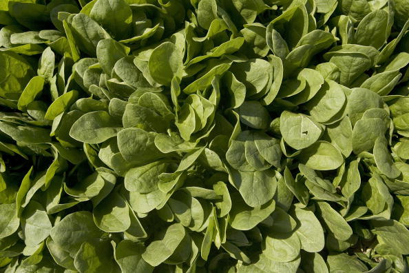 Salad「Spinach Growers Tally Losses As E. Coli Investigation Continues」:写真・画像(6)[壁紙.com]