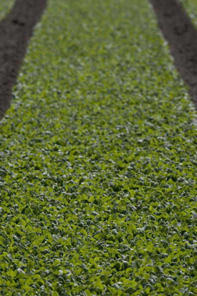 Salad「Spinach Growers Tally Losses As E. Coli Investigation Continues」:写真・画像(8)[壁紙.com]