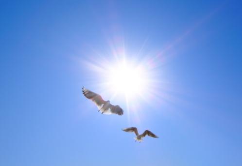 Two Animals「Seagulls flying in the sky, Tokyo Prefecture, Honshu, Japan」:スマホ壁紙(4)