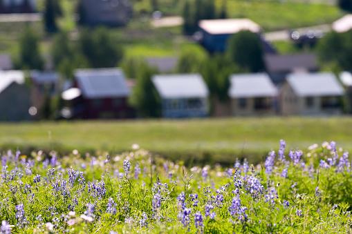Inexpensive「Affordable neighborhood of mountain homes」:スマホ壁紙(11)
