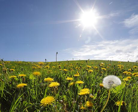 Wildflower「Wild meadow on summers day」:スマホ壁紙(2)