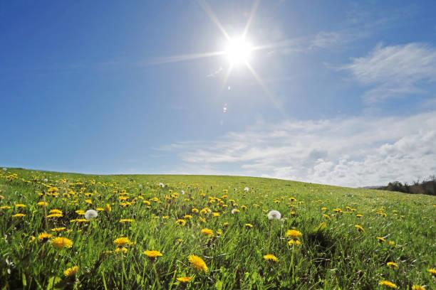 Wild meadow on summers day:スマホ壁紙(壁紙.com)