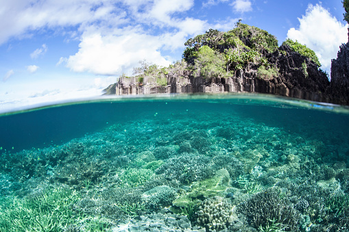 Shallow「A beautiful coral reef grows near a set of limestone islands in Indonesia.」:スマホ壁紙(16)