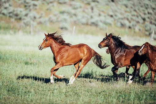 Horse「Stampeding wild horses in USA」:スマホ壁紙(18)