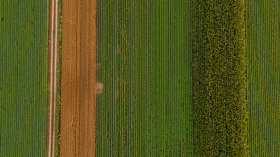 Dirt Road「Serbia, Vojvodina, Aerial view of corn, wheat and soybean fields in the late summer afternoon」:スマホ壁紙(18)