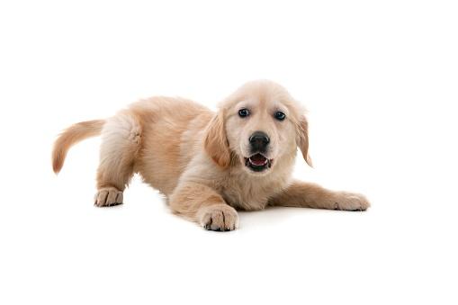 Happiness「impish dog」:スマホ壁紙(8)