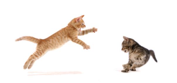 Baby animal「Kitten Attack !」:スマホ壁紙(12)