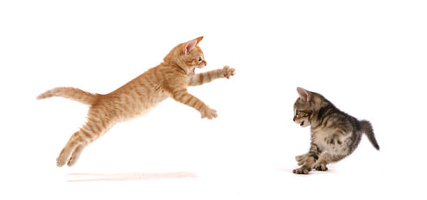 Kitten Attack !:スマホ壁紙(壁紙.com)