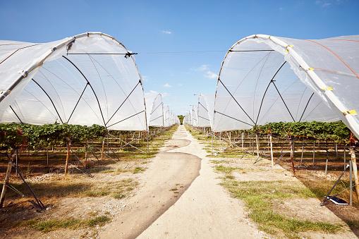 Organic Farm「Modern raised bed poly tunnel farm in summer」:スマホ壁紙(19)