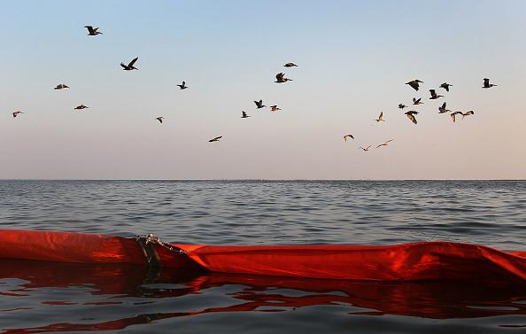 Gulf Coast States「Gulf Coast Struggles With Oil Spill And Its Economic Costs」:写真・画像(14)[壁紙.com]