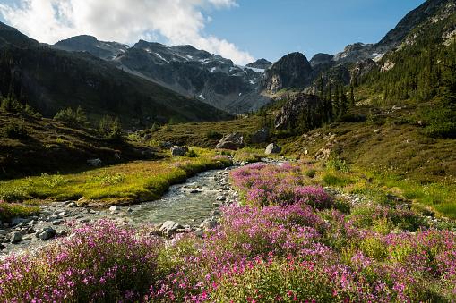Wildflower「Mountain wildflowers in bloom」:スマホ壁紙(14)