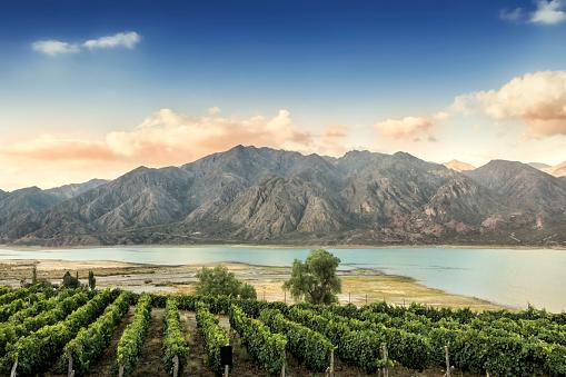 Argentina「Malbec vineyard in the Andes mountain range, Mendoza province, Argentina.」:スマホ壁紙(13)