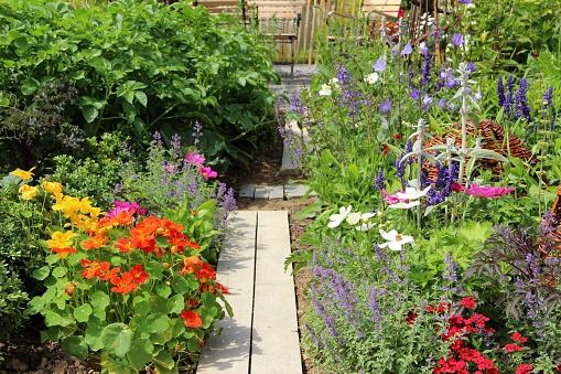 Wildflower「Herb, vegetables and flower garden」:スマホ壁紙(18)