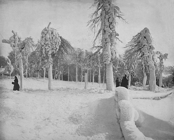 Snowdrift「Frost Work In Prospect Park」:写真・画像(2)[壁紙.com]