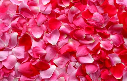 ピンク色「バラの花びらの背景」:スマホ壁紙(9)