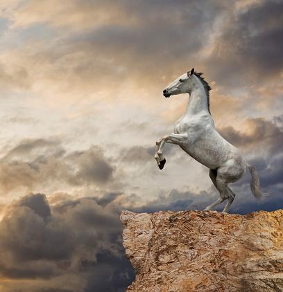 Horse「Horse rearing up at cliff edge」:スマホ壁紙(7)