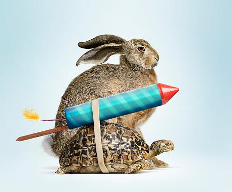 花火「Tortoise and Hare」:スマホ壁紙(10)