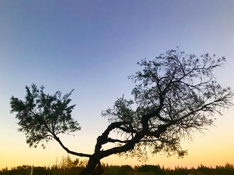 Sunrise - Fort Lauderdale「Tree against sunset sky」:スマホ壁紙(8)
