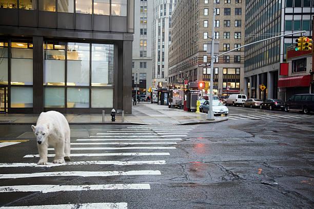 Polar bear crossing city street:スマホ壁紙(壁紙.com)