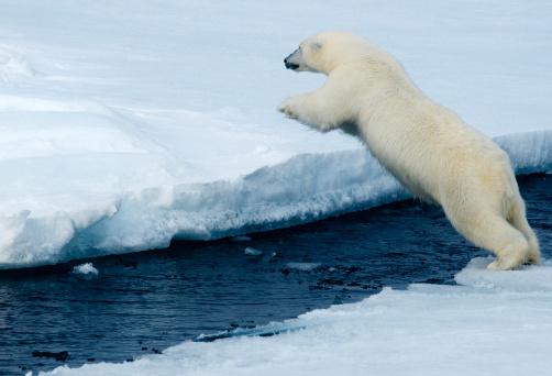Pack Ice「Polar Bear On Pack Ice, Arctic  WILD」:スマホ壁紙(18)
