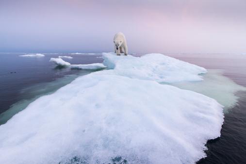 Walking「Polar Bear, Hudson Bay, Canada」:スマホ壁紙(9)