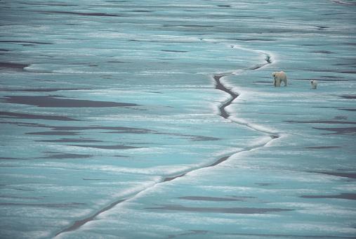 Polar Bear「Polar Bear Mother and Cub」:スマホ壁紙(17)