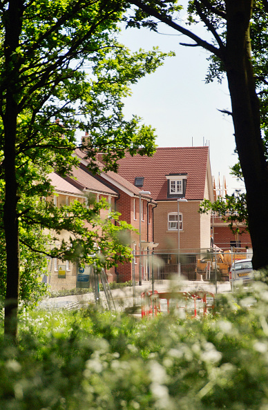 Tree「Looking though woodland onto a housing estate under construction, Colchester, Essex, UK」:写真・画像(4)[壁紙.com]