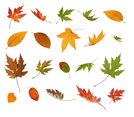 Spinning「Different Falling Autumn Leaves」:スマホ壁紙(15)