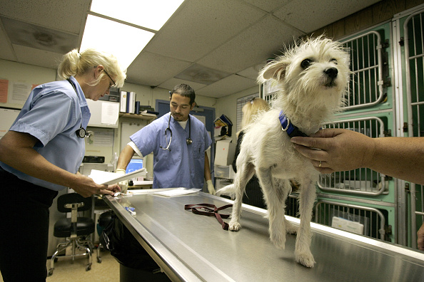 Emergency Shelter「Apple Co-Founder Donates Money To Animals Displaced In Katrina Disaster」:写真・画像(9)[壁紙.com]