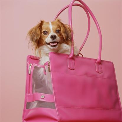 Making A Face「Papillion dog in purse, portrait」:スマホ壁紙(3)