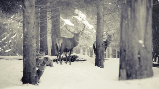 Named Animal「Red Deer family」:スマホ壁紙(16)