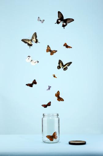 Freedom「butterflies escaping from jar」:スマホ壁紙(0)