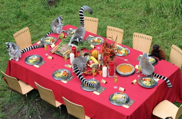 Salad「Lemurs Enjoy Thanksgiving Feast At San Francisco Zoo」:写真・画像(18)[壁紙.com]